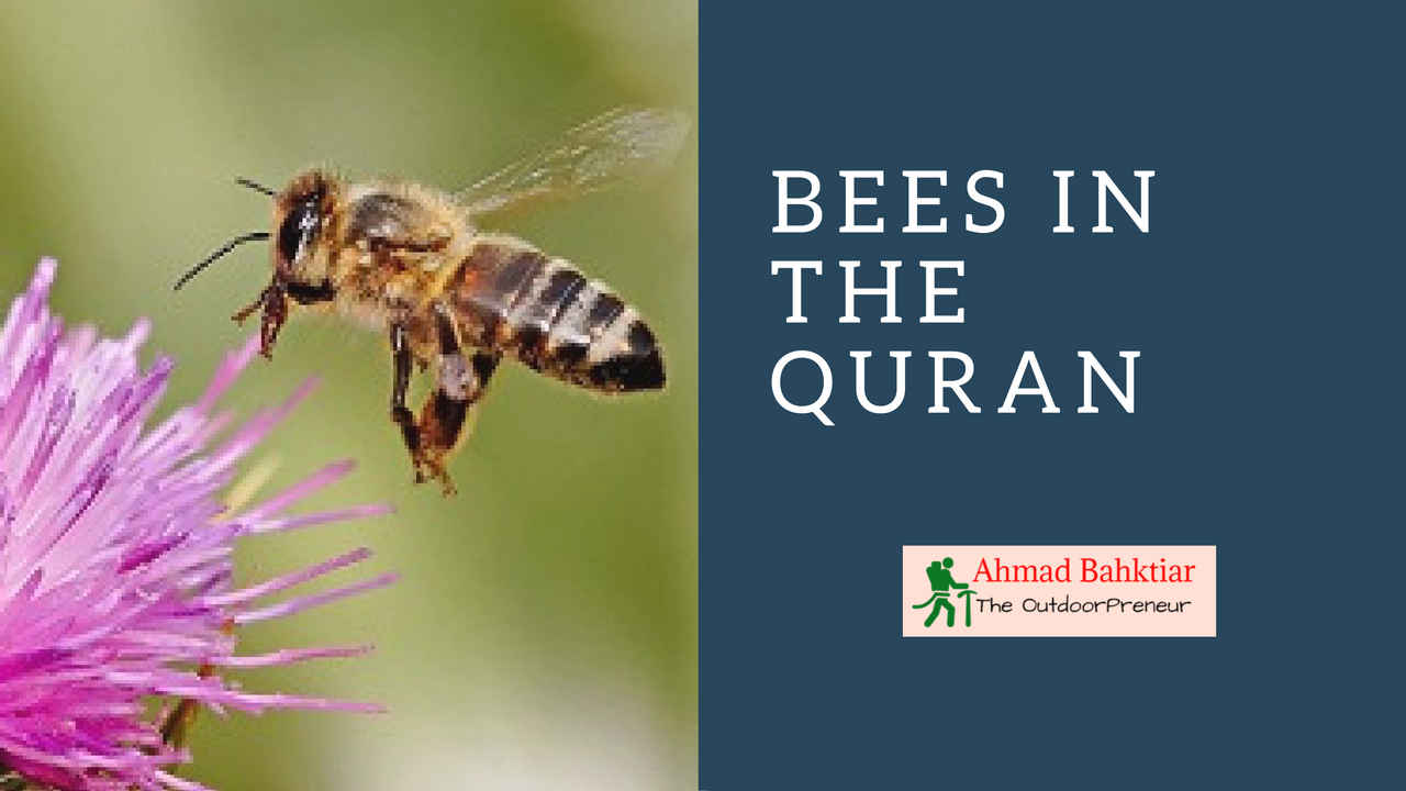 Bees in the Quran